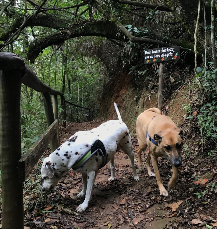 Na imagem, dois cachorros seguem uma trilha pela natureza.