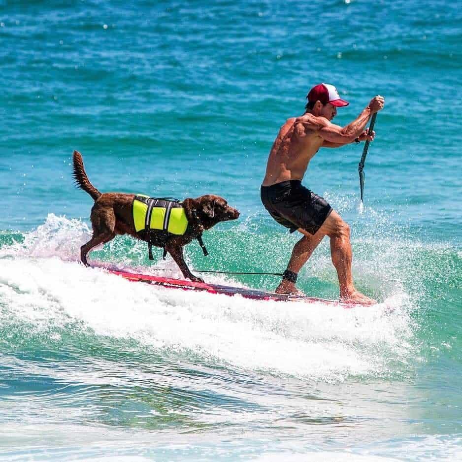 Na imagem, um cachorro e seu dono estão no mar sobre uma prancha de stand up paddle.